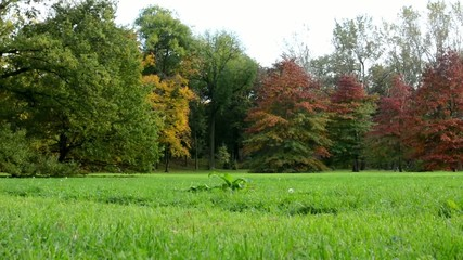 Autumn park (forest - trees) - colored trees - grass