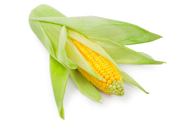 Fresh raw corn on white background. isolated