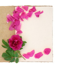 Rose Flower and Notebook