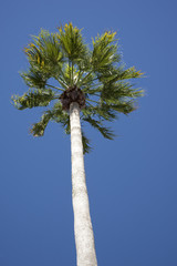 Underside of a Palm tree against a blue sky