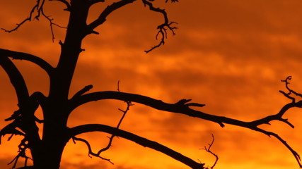 silhouette of a tree against the background of a burning sunset