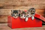 Kittens in the box - 72635373