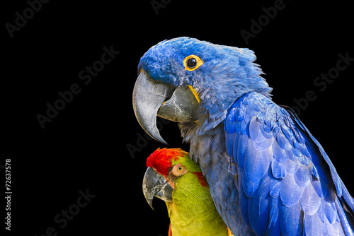 Foto op Plexiglas Papegaai Colorful Macaws