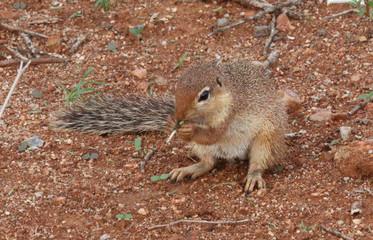 kleines Hörnchen
