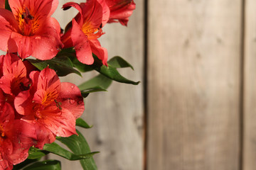 Pink Peruvian Lily on wooden background