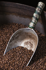Shovel collecting coffee beans