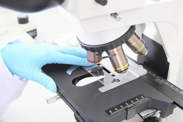 Female Scientists Using Microscopes In Laboratory/lab