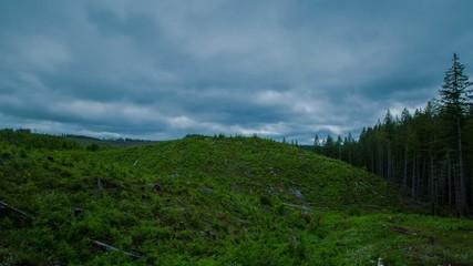 Oregon Deforestation 581