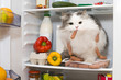 cat steals sausage from the refrigerator - 72649529