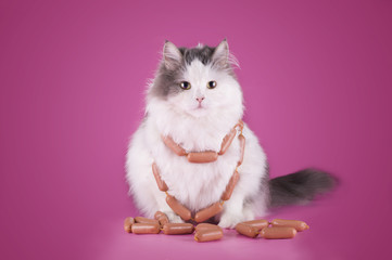 fat cat is eating a sausage on a pink background