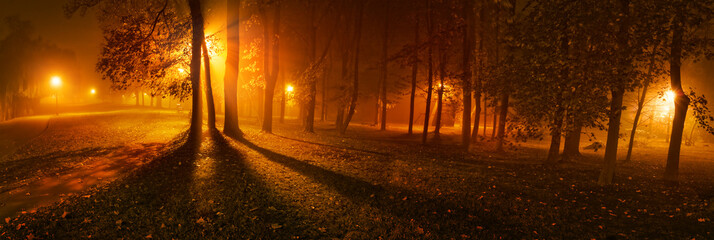 Panoramic view of trees on a foggy night in park