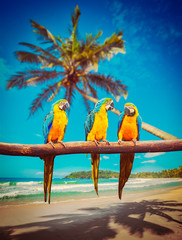Parrots Blue-and-Yellow Macaw on beach