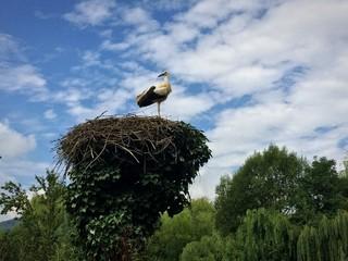 nid de cigogne