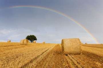 Field of hay, bales. Rainbow in the sky