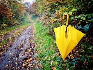 Matschiger Waldweg im Herbst
