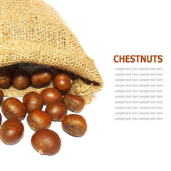 Fresh Chestnuts in yute isolated on white