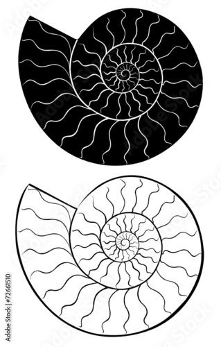 shell seashells - 72661510