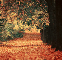 Beautiful dreamy autumn forest with walkiing path