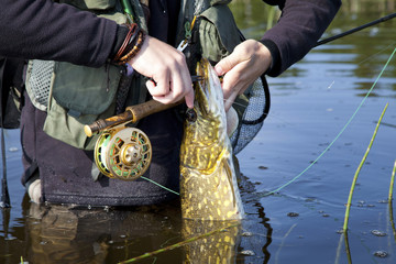 Person Angler Fisherman Releasing Pike Fish
