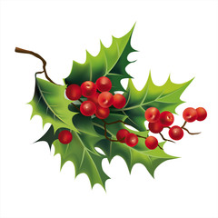 Christmas holly on white. Vector