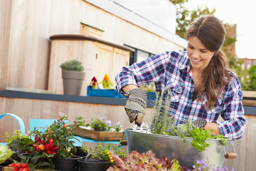 Woman Planting Container On Rooftop Garden