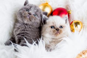katzenbabys weihnachten