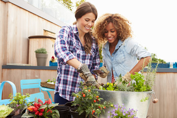 Two Female Friends Planting Rooftop Garden Together