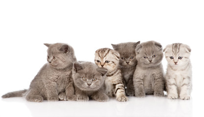 large group kittens in front. isolated on white background
