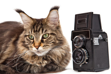 старый фотоаппарат и кошка