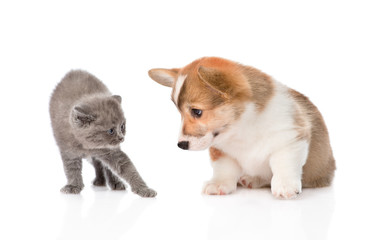 kitten frightened by a dog. Isolated on white background