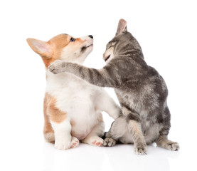 cat and dog fight. isolated on white background