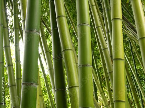 bambusowa-dzungla