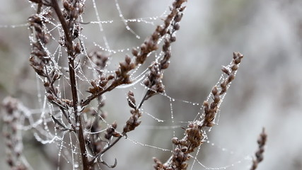 spider cobweb with dew drops on wind