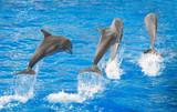 Four dolphins jumping in clear blue sea.