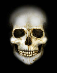 skull in the darkness colored