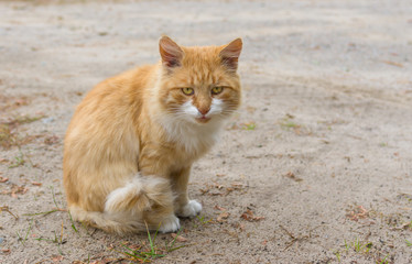 Outdoor portrait of guarded cat