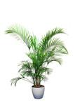bitki örtüsü poster