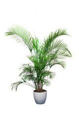 bitki örtüsü