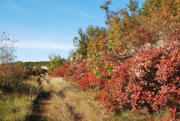 Autumn Colours in the Carso