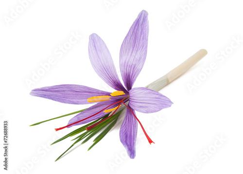 Aluminium Krokus saffron flower