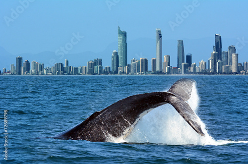 Whale Watching in Gold Coast Australia - 72689798