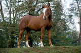 Cavallo al Paddock 3