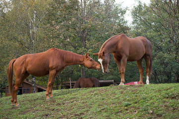 Cavalli innamorati 11