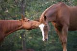 Cavalli innamorati 7