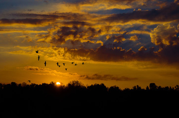 sunrise flock
