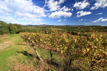 paesaggio con vigne