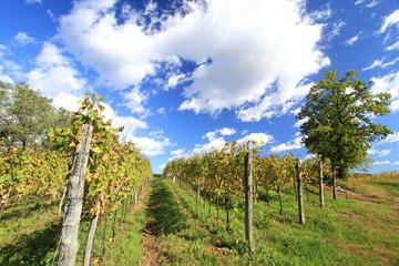 viti in autunno