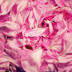 Background of fresh pink flower petals
