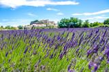 Fototapety Lavender fields in France