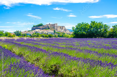 Poster Provence - Lavender fields in France